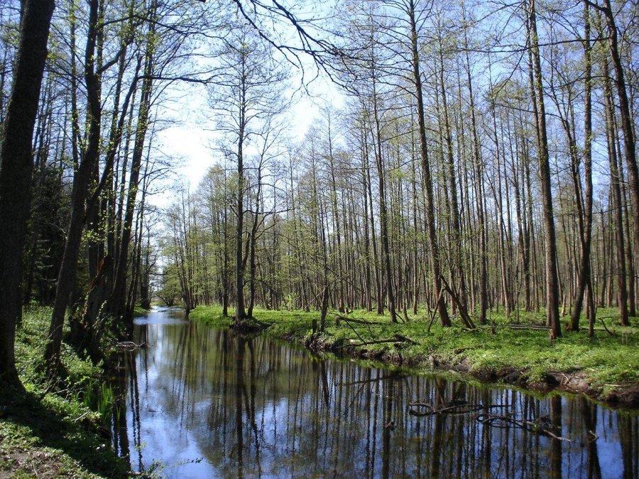 európa utolsó ősrengetege a bialowiezaerdő